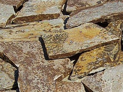 gneiss YELLOW SPOTTED